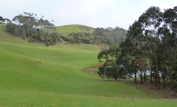 1.pasture