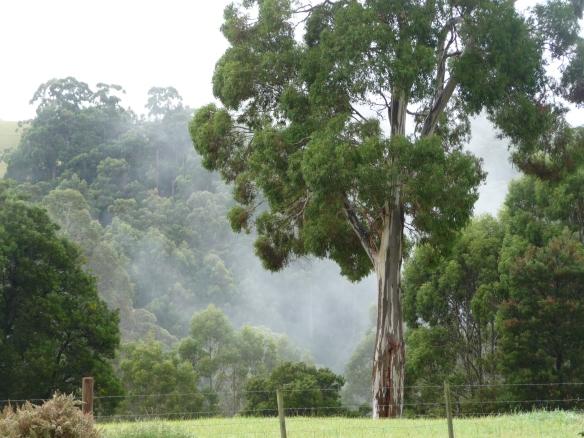 11.mist