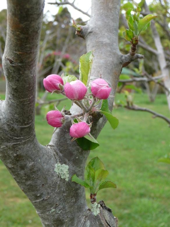 17.blossom