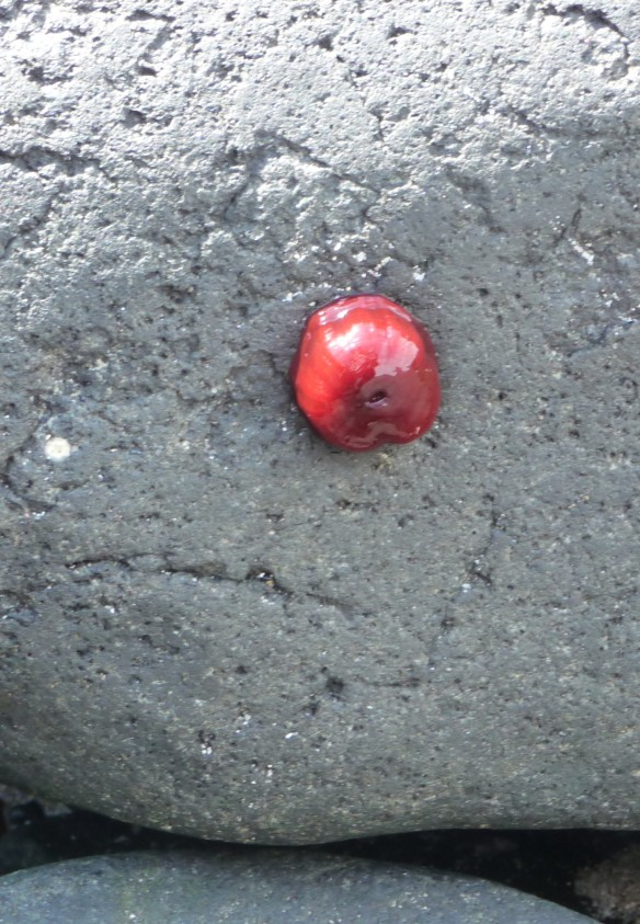 18.anemone