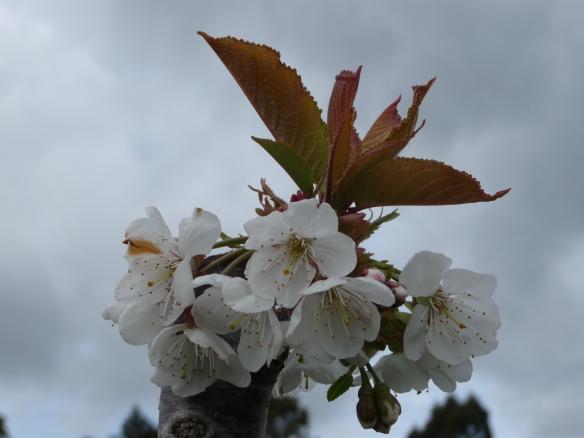 18.blossom