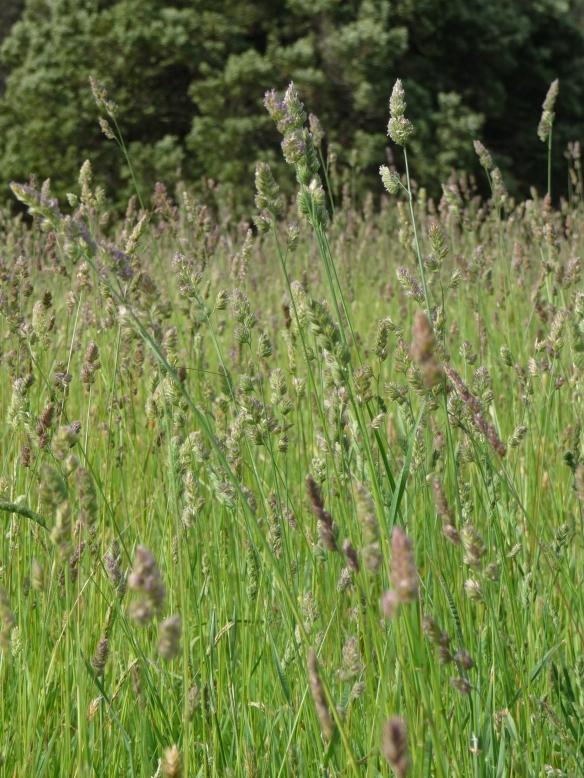 18.grass