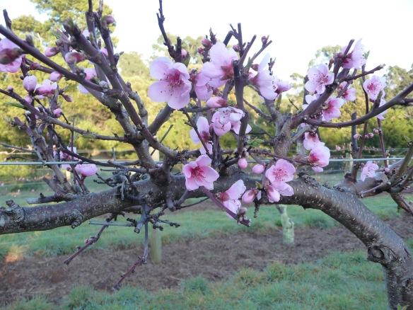 19.blossom