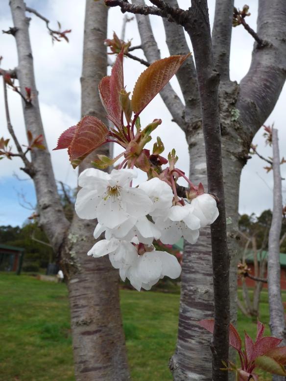 20.blossom