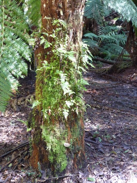 10.lichen1
