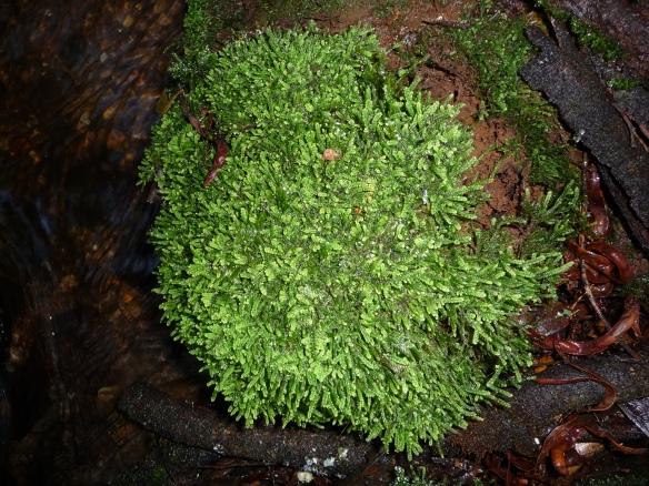 11.lichen