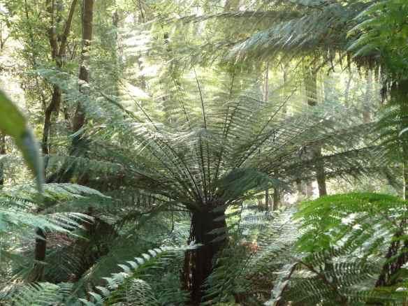 14.Fern forest