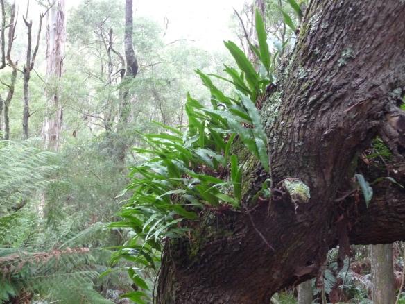 16.tree5
