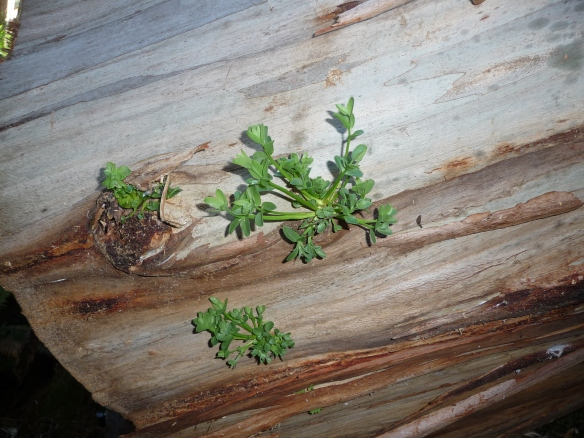 18.lichen2