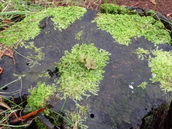 19.lichen3
