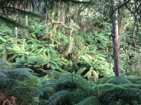 2.left ferns