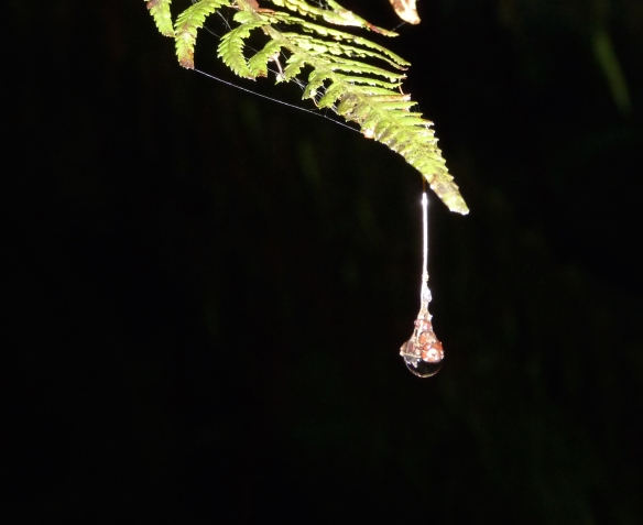 24.droplet