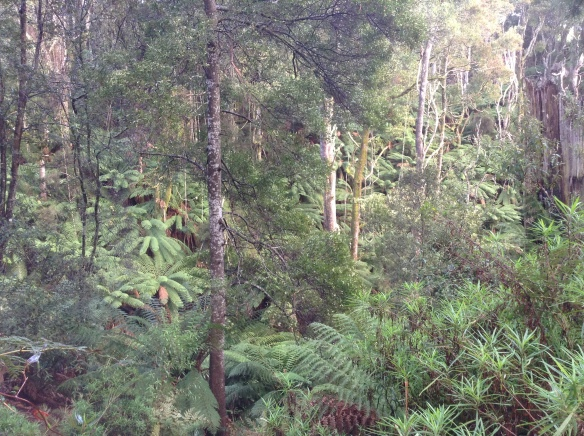 3.left ferns