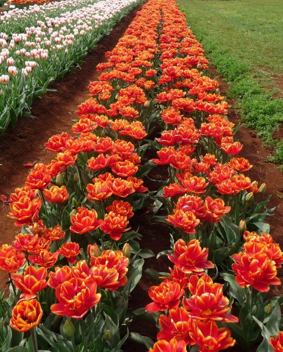 6.row orange
