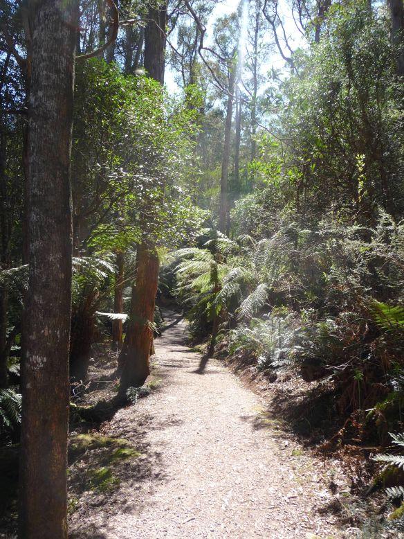 1.walking track1