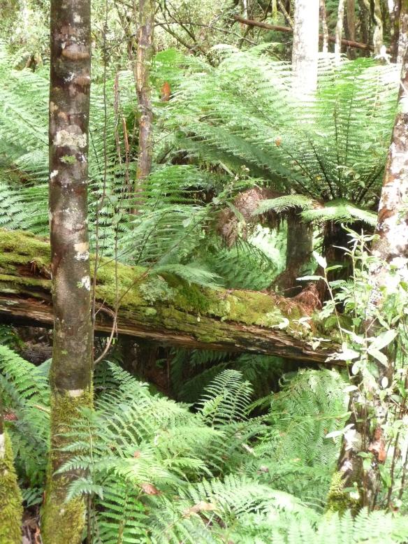 10.rainforest