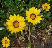 11.flowers