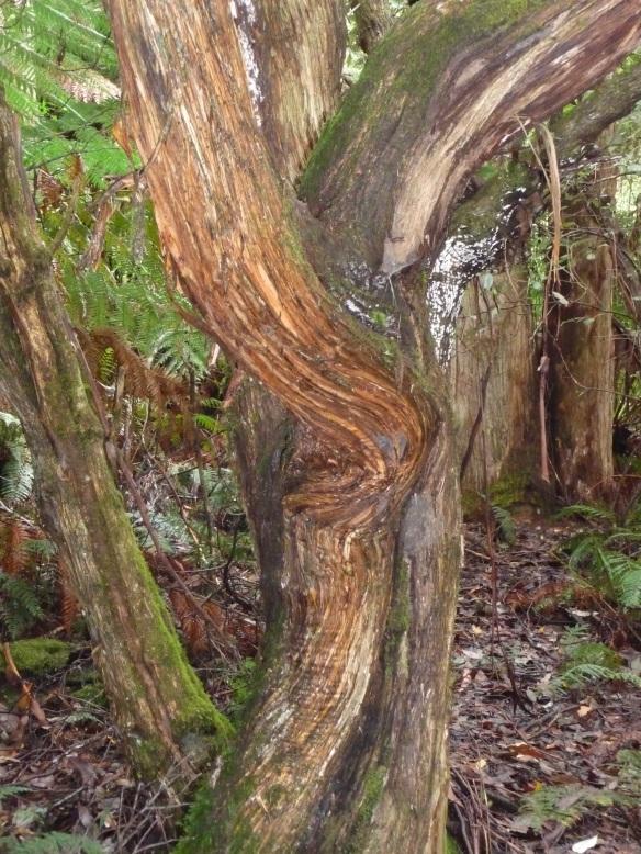 12.rainforest