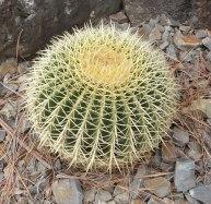 13.cactus2