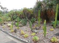 14.cactus3