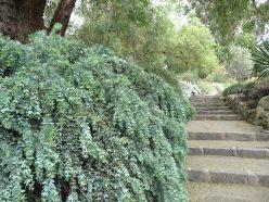 18.grey garden1