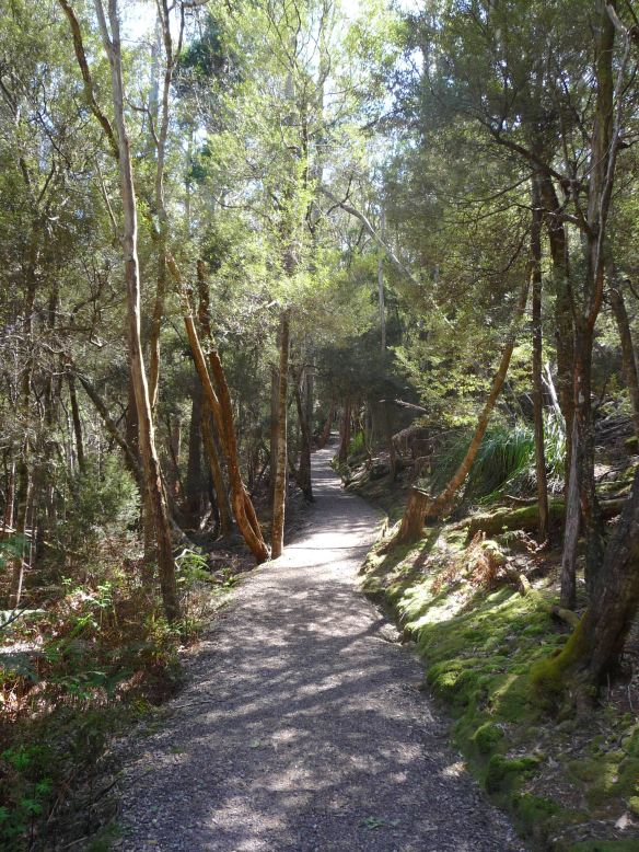 2.walkingtrack2