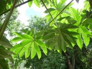 50.foliage2