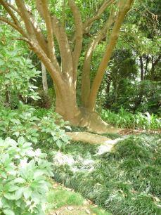 53.tree2
