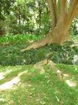 54.tree3