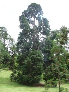 55.tree4