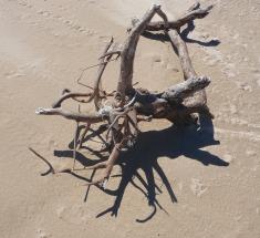 29.driftwood1