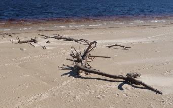 30.driftwood2