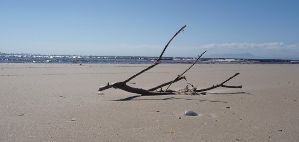 32.driftwood3