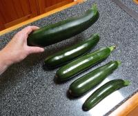 32.veggies2