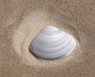 34.shell2