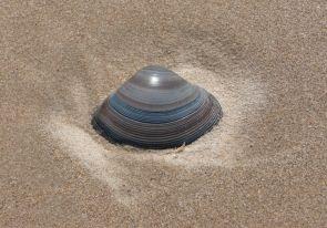 37.shell5