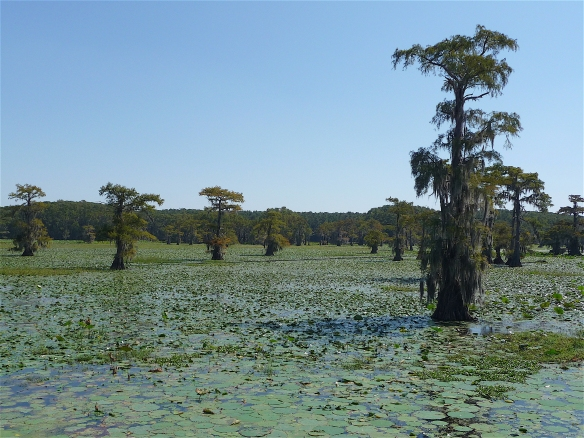 10.Caddo Lake