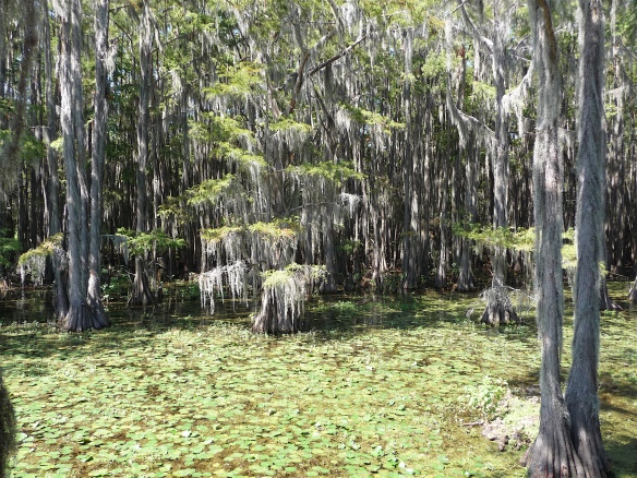 4.Caddo Lake