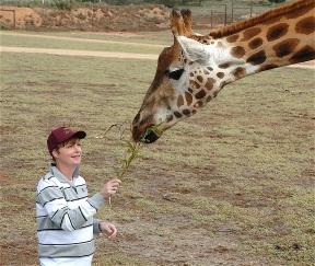 42.giraffe7