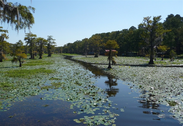 5.Caddo Lake
