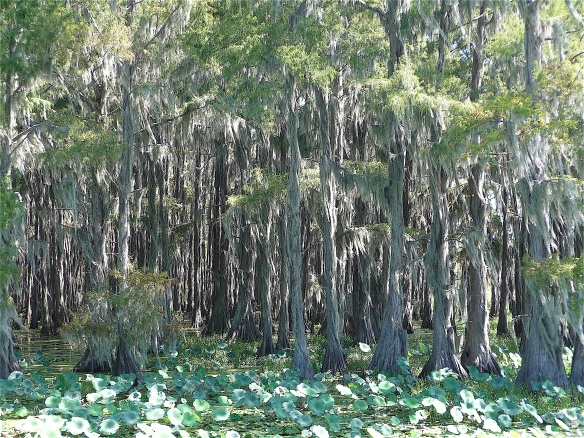 7.Caddo Lake