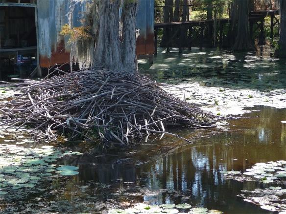 9.beaver nest