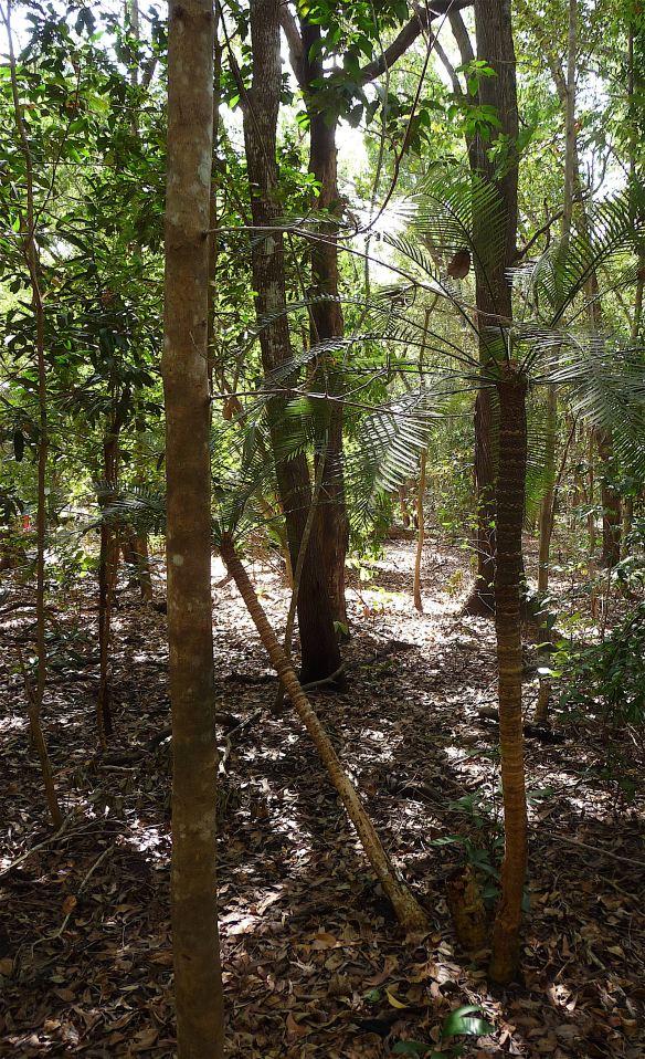 1.woodland1