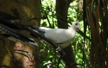 12.aviary8