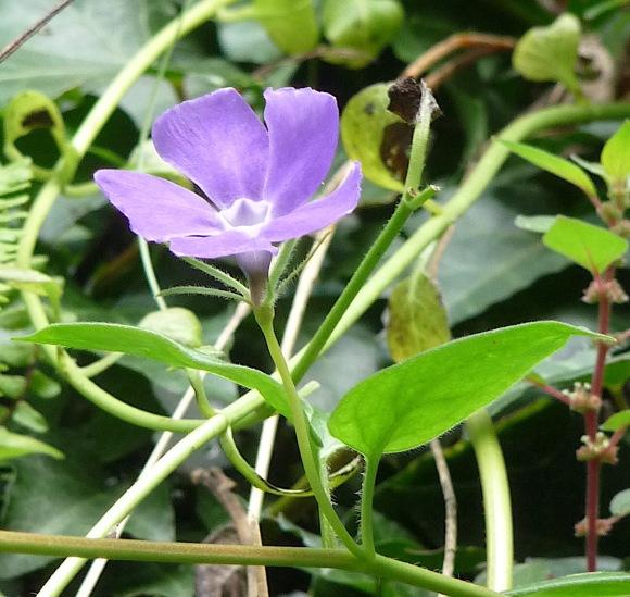 15.flowers5