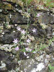 16.flowers6