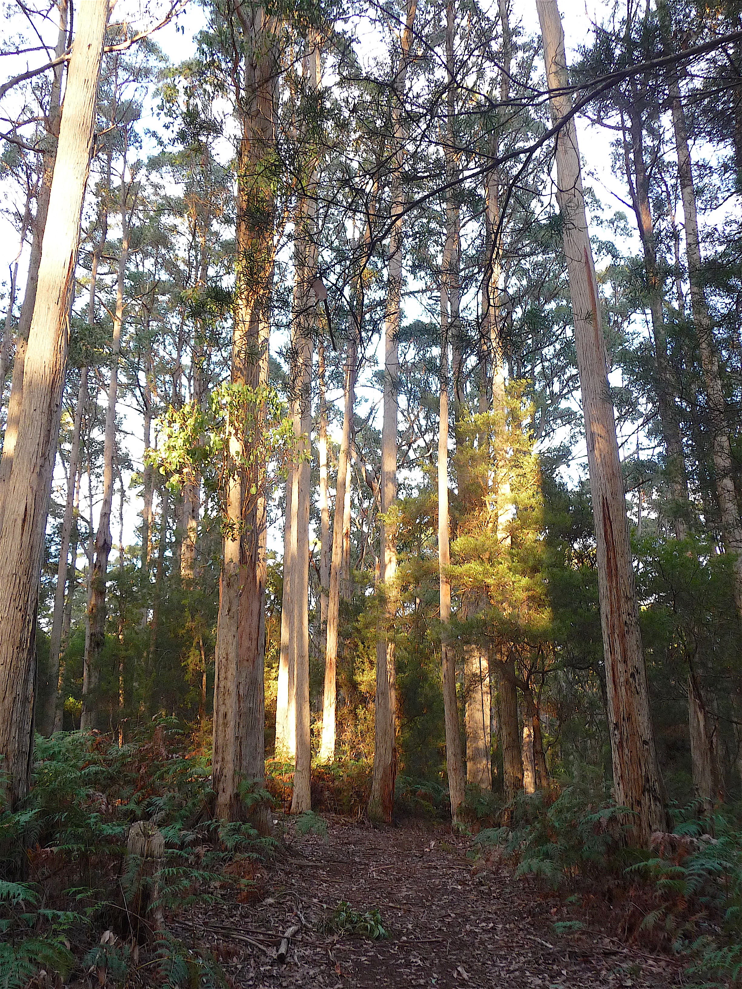 8.forest2