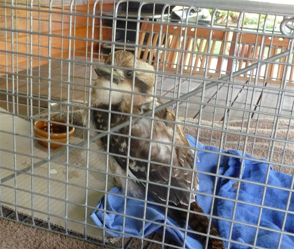 11.kookie in cage