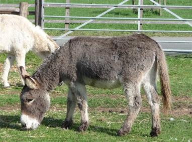 12.Donkey Sanctuary