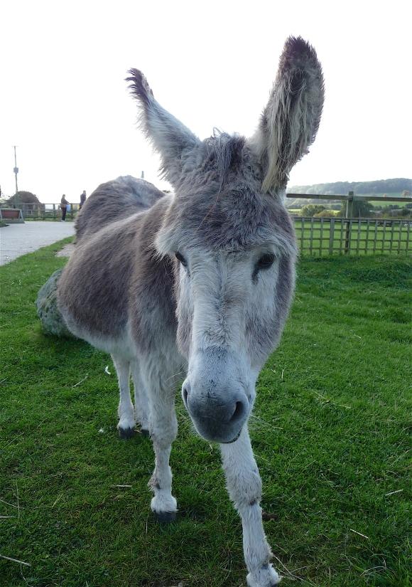 16.Donkey Sanctuary